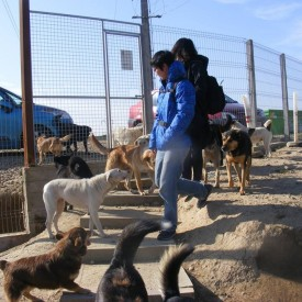 In March 2015, two vets from Taiwan, visited our open shelter in Bihor