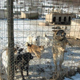 A new life, in the open shelter in Bihor, for the rescued dogs from Bacau, Braila and A.D.P. Oradea shelters
